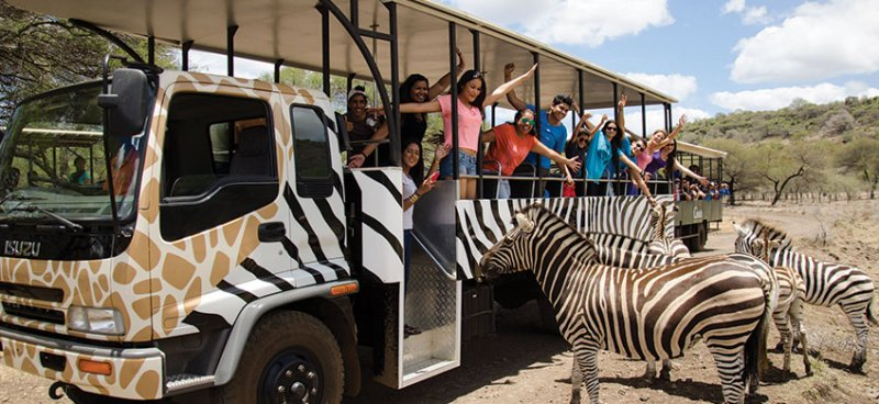 Casela World of Adventures Zebra Bus ouest Ile Maurice
